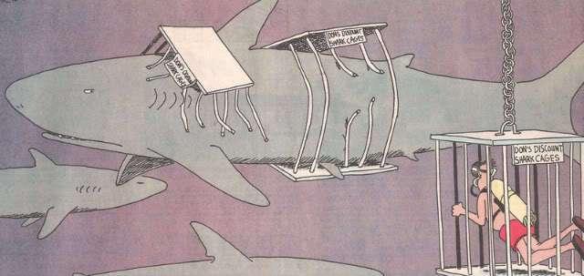20 foot great white shark la jolla page 5 bloodydecks